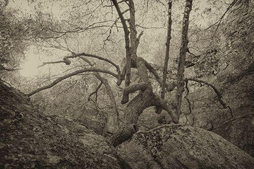 Lost City Tree Study
