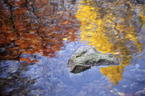 113 Autumn Reflections