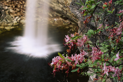398 Azalea & Falls